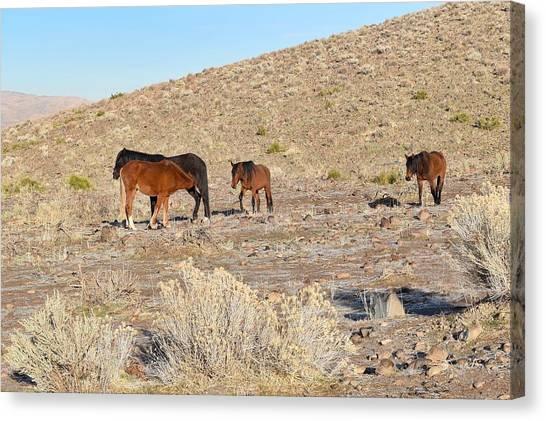 Virginia Range Mustangs Canvas Print