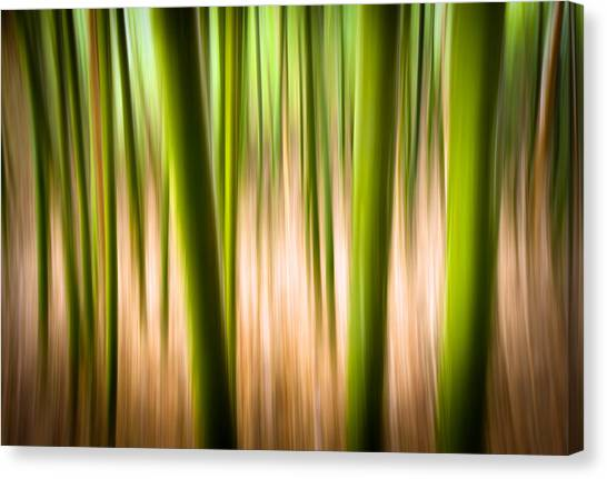 Impressionistic Canvas Print - Vitality - Abstract Panning Bamboo Landscape Photography by Dave Allen