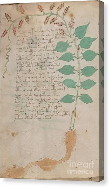 Voynich Flora 07 Canvas Print