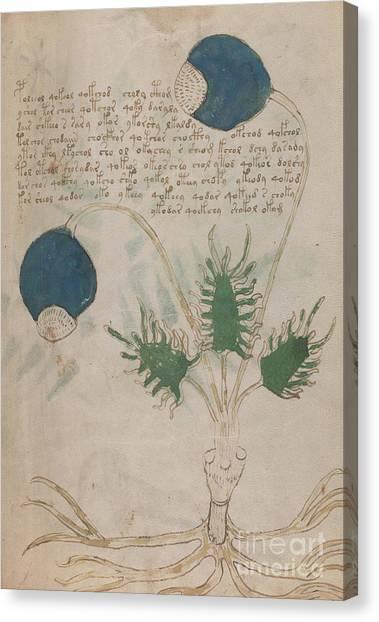Voynich Flora 20 Canvas Print