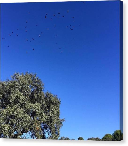 Sparrows Canvas Print - Vuelo De águilas #córdoba #cordobaesp by Manuel Machuca