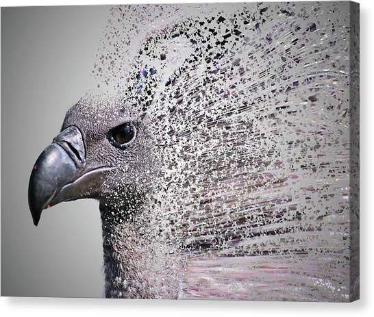 Condors Canvas Print - Vulture Break Up by Martin Newman