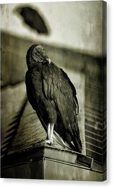 Anhinga Canvas Print - Vulture by Cindi Ressler