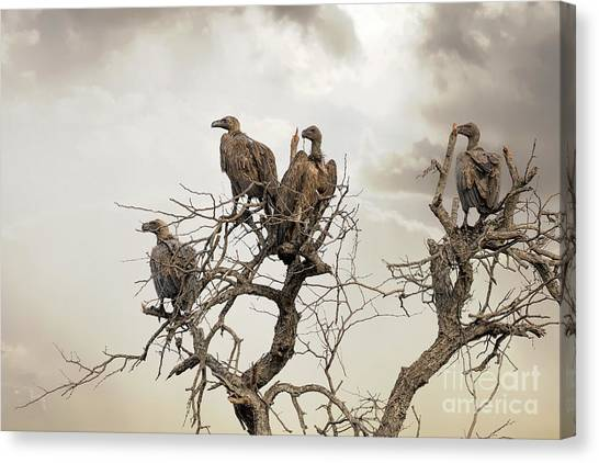 Vultures Canvas Print - Vultures In A Dead Tree.  by Jane Rix
