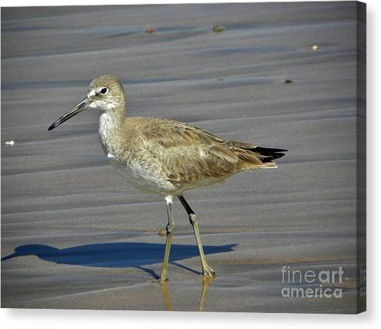 Wading Day Canvas Print