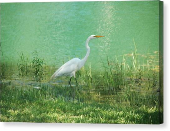 Wading Egret Canvas Print