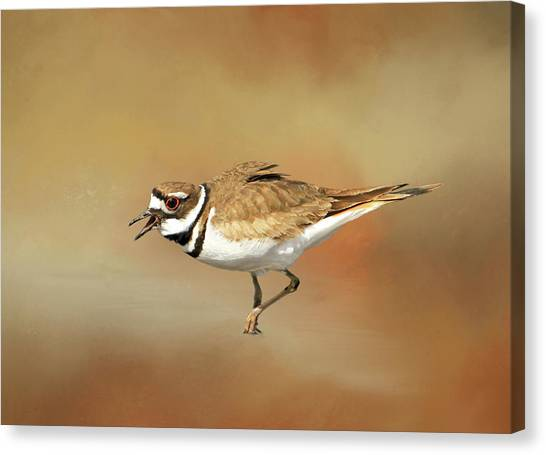 Killdeer Canvas Print - Wading Killdeer by Donna Kennedy