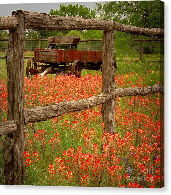 Bluebonnets Canvas Print - Wagon In Paintbrush - Texas Wildflowers Wagon Fence Landscape Flowers by Jon Holiday