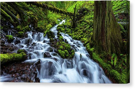 Waterfalls Canvas Print - Wahkeena by Chad Dutson