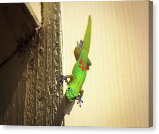 Waimea Gecko Canvas Print