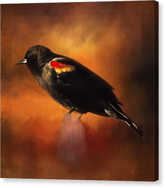 Waiting - Bird Art Canvas Print