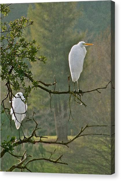 Waiting Egrets Canvas Print