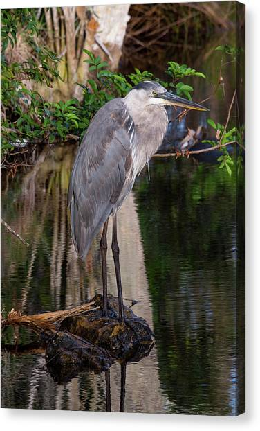 Waiting For Breakfast Canvas Print
