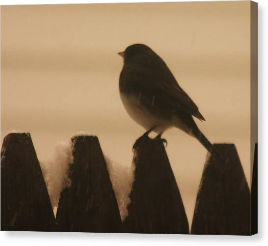 Waiting For Spring Canvas Print by Dennis Curry