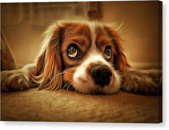 Waiting Pup Canvas Print