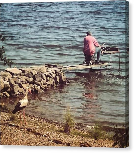 Storks Canvas Print - #waitingforthefish  #stork #fisher by Volodymyr Golodryga