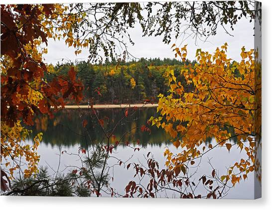 Walden Pond Canvas Print - Walden Pond Fall Foliage Leaves Concord Ma by Toby McGuire