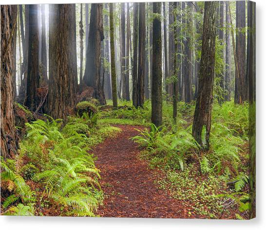 Forest Paths Canvas Print - Walk In The Woods 2 by Leland D Howard