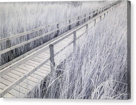 Walk Through The Marsh Canvas Print