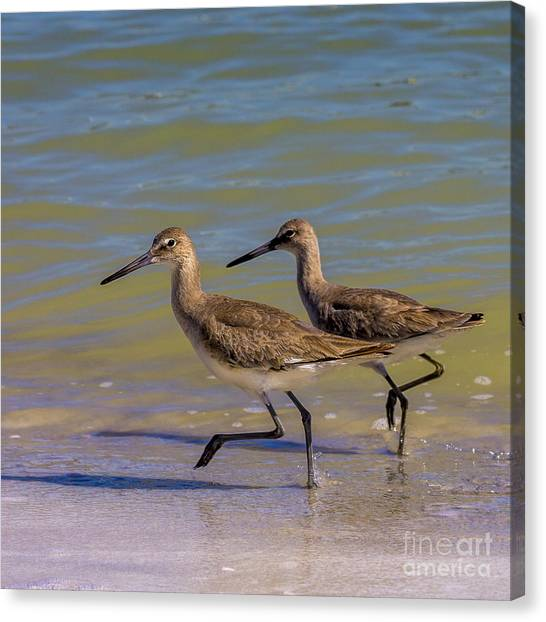 Sandpipers Canvas Print - Walk Together Stay Together by Marvin Spates