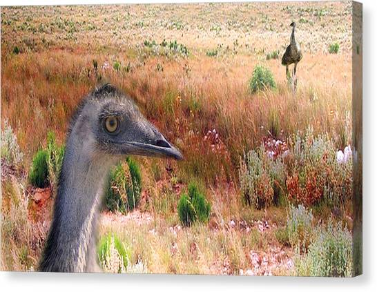 Emu Canvas Print - Walkabout by Holly Kempe