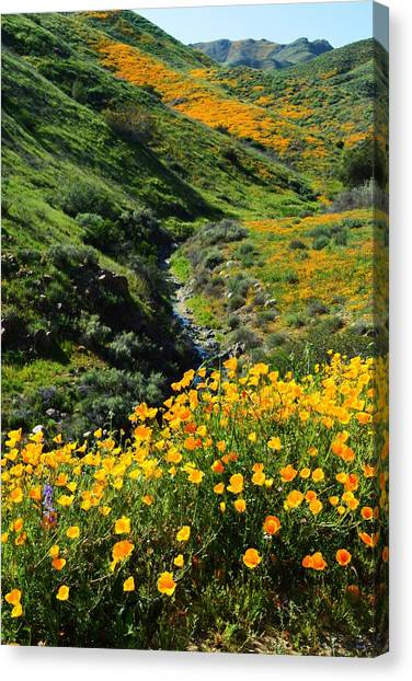 Installation Art Canvas Print - Walker Canyon Vista by Glenn McCarthy Art and Photography