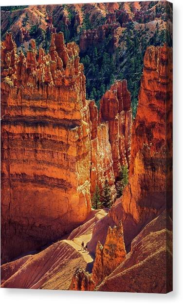 Walking Among Giants Canvas Print