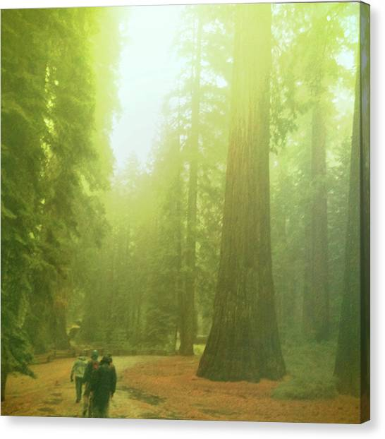 Walking By Giants Canvas Print