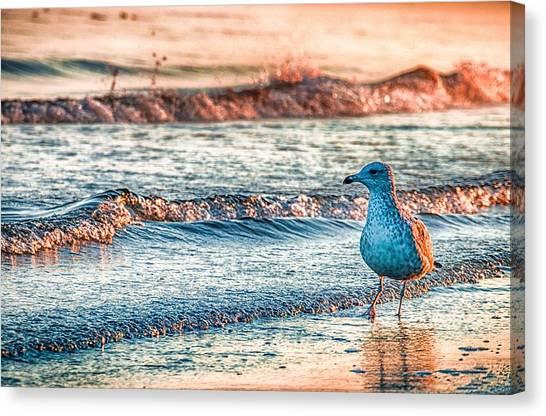 Animals Canvas Print - Walking On Sunshine by Mathias Janke