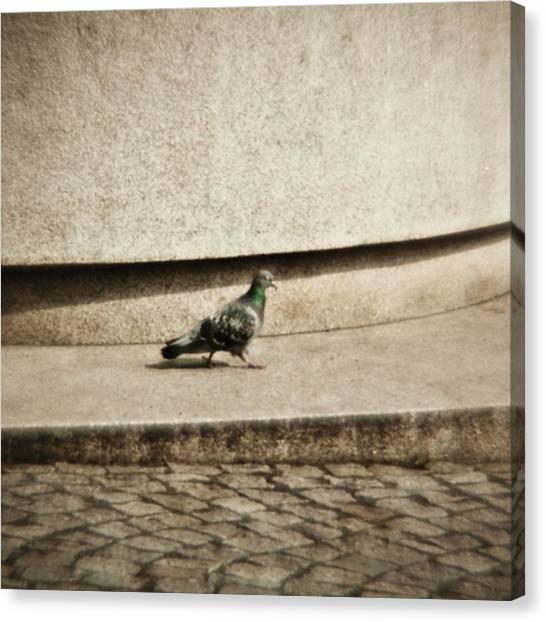 Songbirds Canvas Print - Walking Pigeon (some Years Ago) Lomo by Mandy Tabatt