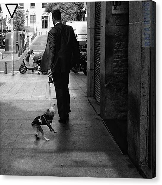 Puppies Canvas Print - Walking The Dog  #man #people by Rafa Rivas