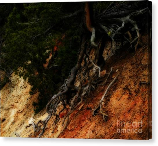 Walking Tree Canvas Print