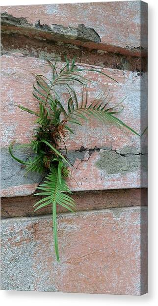Wall Fern Canvas Print