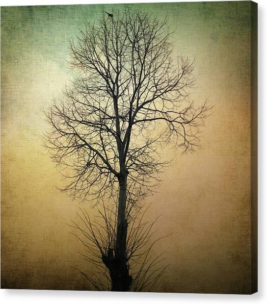 Surrealistic Canvas Print - Waltz Of A Tree by Taylan Apukovska