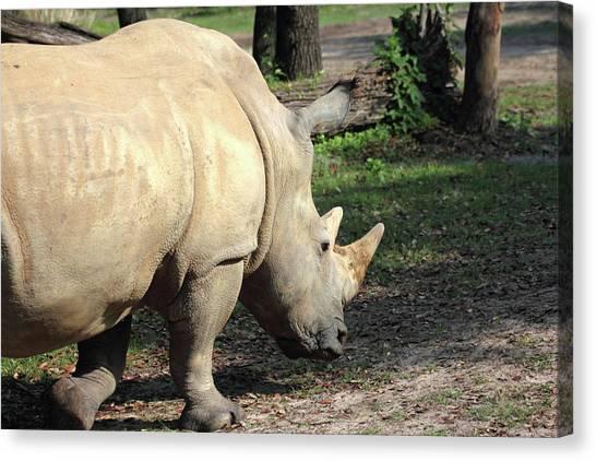 Rhinocerus Canvas Print - Wandering Rhino by Mary Haber