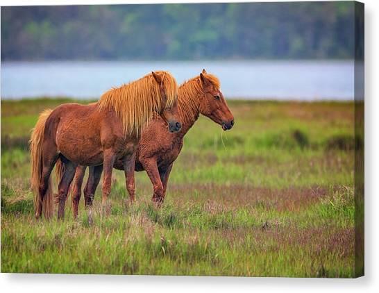 Maryland Horses Canvas Print - Wandering The Marsh by Rick Berk