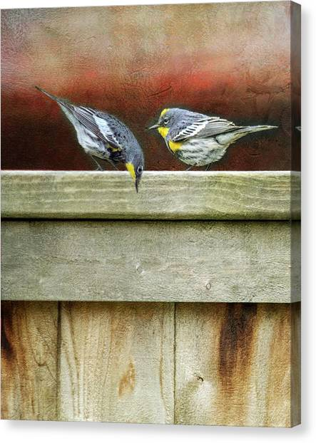 Warblers Canvas Print - Warbers On The Fence by Rebecca Cozart