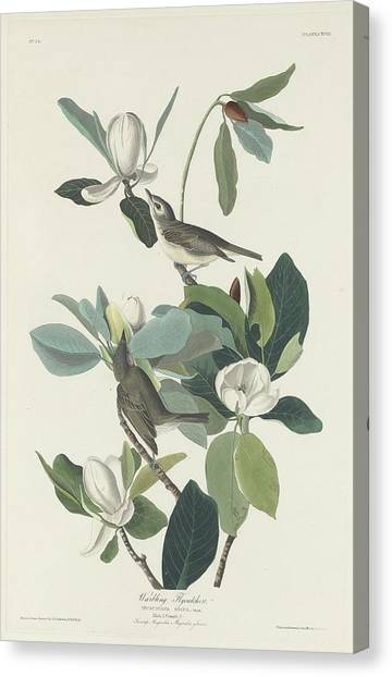 Flycatcher Canvas Print - Warbling Flycatcher by Dreyer Wildlife Print Collections