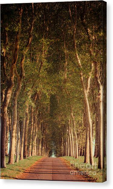 Warm French Tree Lined Country Lane Canvas Print