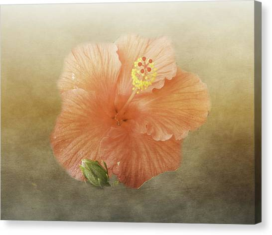 Canvas Print featuring the photograph Warm Hibiscus by Judy Hall-Folde