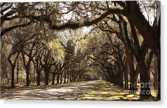Old Country Roads Canvas Print - Warm Southern Hospitality by Carol Groenen