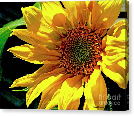 Warm Welcoming Sunflower Canvas Print