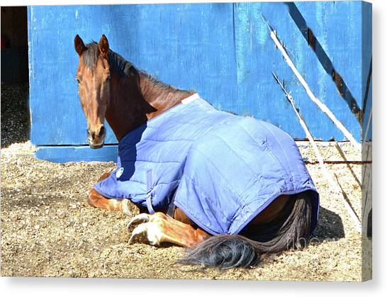 Warm Winter Day At The Horse Barn Canvas Print