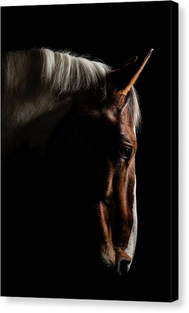Equestrian Canvas Print - Warmblood by Samuel Whitton
