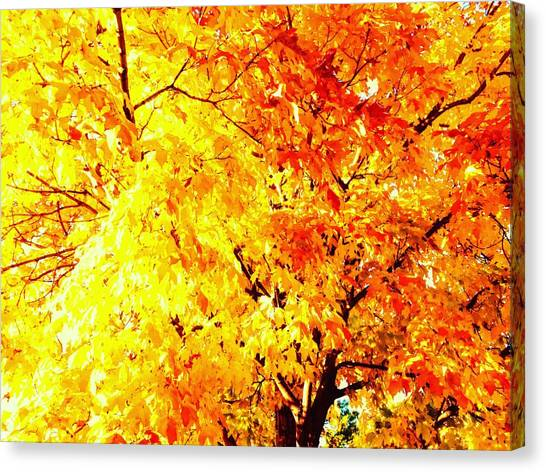 Warmth Of Fall Canvas Print