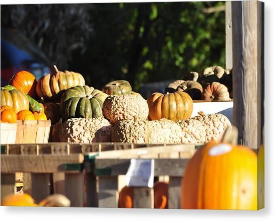 Wart Pumpkins Canvas Print by Jan Amiss Photography