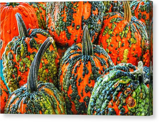 Warty Pumkins  Canvas Print