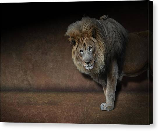 Was That My Cue? - Lion On Stage Canvas Print
