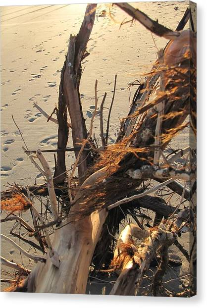Trout Canvas Print - Washed Up by Laura Henry
