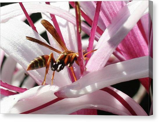 Wasp On Flower Canvas Print by Francesco Roncone